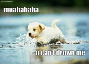 lol-doggie-i-can-walks-on-water-300x217